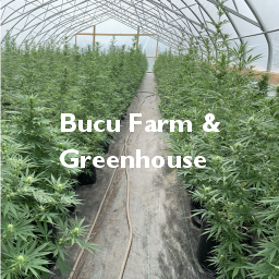 Bucu Farm and Greenhouse