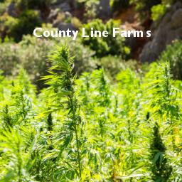 County Line Farms