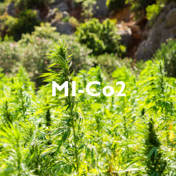 MI-Co2