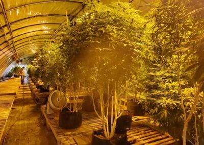 Mid Michigan Hemp Supply greenhouse