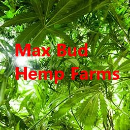 Max Bud Hemp Farms